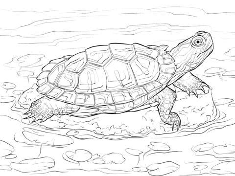 red eared slider coloring pages