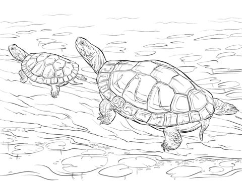 two painted turtles coloring pages coloring pages
