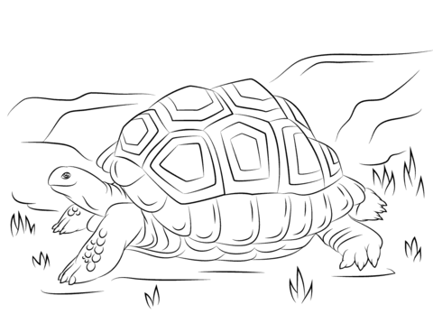 Aldabra Giant Tortoise coloring pages