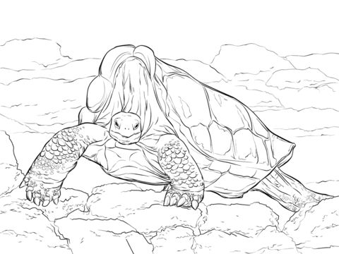 Island Giant Tortoise coloring pages
