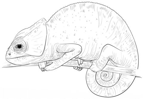 chameleon coloring page coloring pages