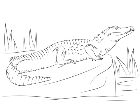 nile crocodile side view coloring page coloring pages