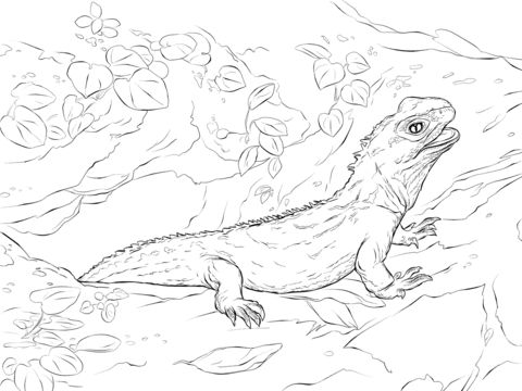 Northern Tuatara coloring pages