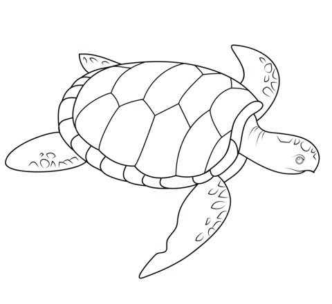 sea turtle coloring page coloring pages
