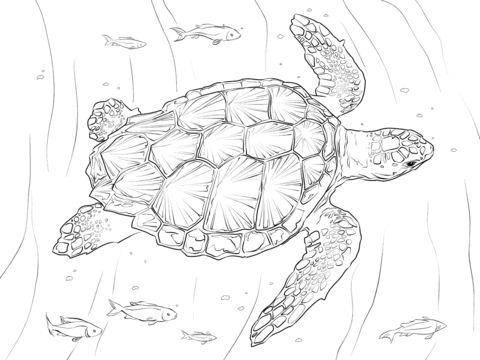 Loggerhead Turtle coloring pages