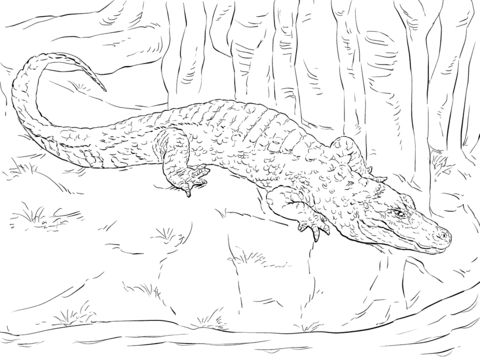 Chinese Alligator coloring pages
