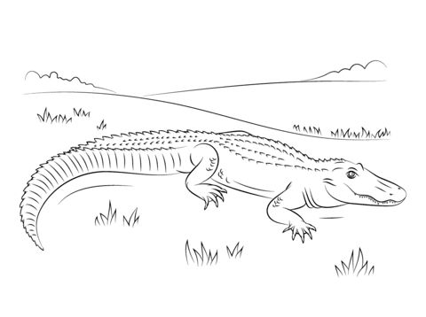 Free & Printable Cute American Alligator Coloring Picture ...