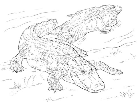 Printable Alligator Coloring Page for Kids #2 – SupplyMe | 360x480