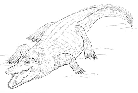 nile crocodile coloring page coloring pages