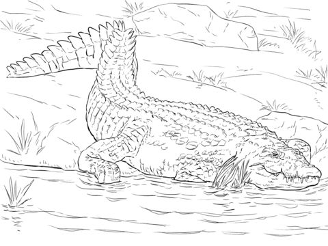 realistic nile crocodile coloring page coloring pages