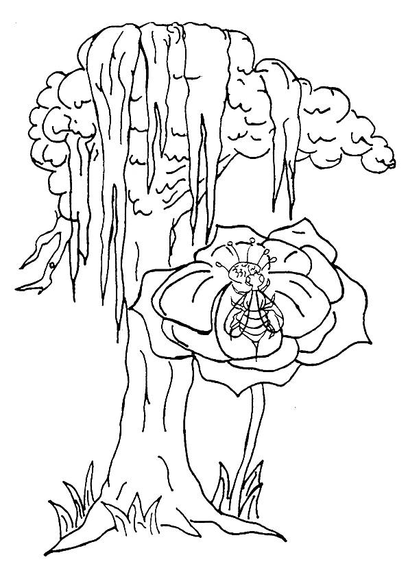 Cypress Tree coloring pages